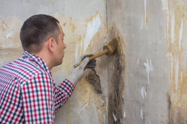 What Does Mold Remediation Mean?