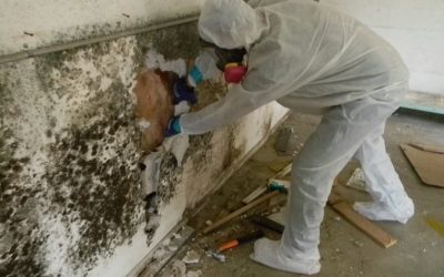 What Is Mold Remediation Process?