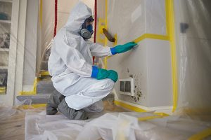 what do mold remediation companies do