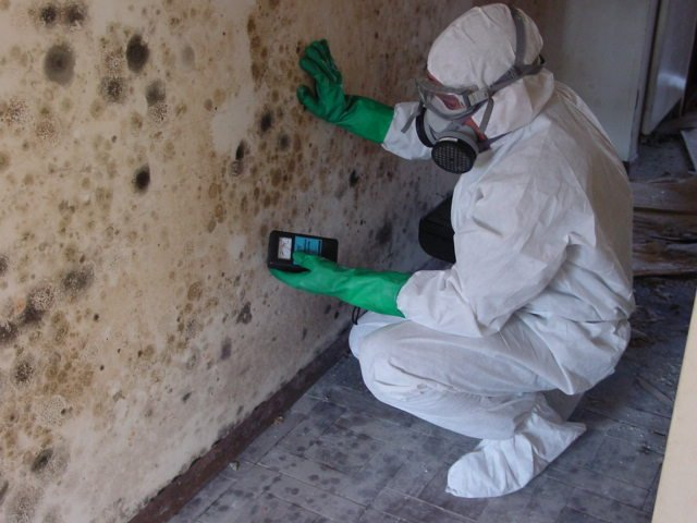 what chemicals do mold remediation companies use