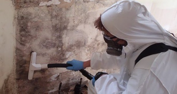 how to become a mold remediation specialist
