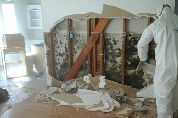 what can i use for mold remediation