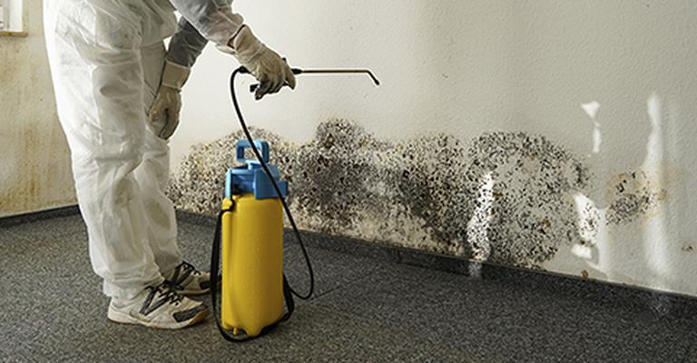 when is mold remediation required